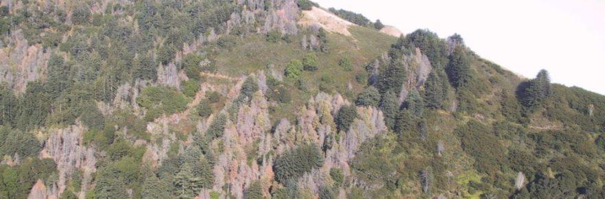 Sudden Oak Death landscape